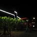 2012 Cal Plans Woods Chardonnay Harvest 0006