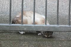 S0798686 (Moldovia) Tags: pet cute animal cat fur nose eyes feline pointandshoot paws pointshoot catspotting fujifilmfinepixhs20exr