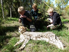 Family with reclining cheetah (John of Wirral) Tags: family southafrica cheetah westerncape catsanctuary tenikwa
