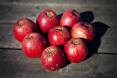 happy 8th flickrversary (Sabinche) Tags: autumn red apple fruit flickrversary