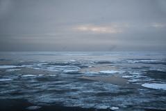 Sea Ice (Algot Foto) Tags: ocean cruise seascape ice landscape svalbard arctic seaice scientific oceanography