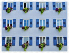 Das offene Fenster - open window (Djeff Costello) Tags: flowers windows blumen bleu blau rathaus wrttemberg volet brgermeister gppingen schlat