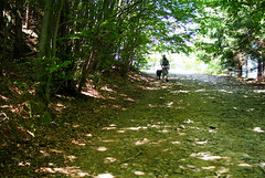 lombalagút / foliage tunnel (debreczeniemoke) Tags: nyár summer erdő forest gutin gutinhegység gutinmountains munţiigutin munţiigutâi olympusem5