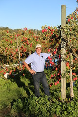 IMG_5930 (mavnjess) Tags: 28 may 2016 harvey edward giblett newton orchards manjimup harveygiblett newtonorchards cripps pink lady crippspinklady popaharv eating apple crunch crunchy biting apples pinklady pinkladyapple harv gibbo orchard appleorchard orchardist