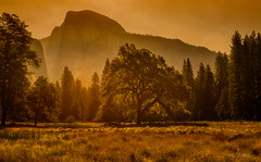 Shine in the golden light (Ping...) Tags: halfdome yosemitevalley yosemite valley tree meadow sunrise golden