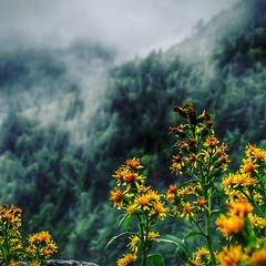 Rainy Mountains (Moments With Brad) Tags: suggestivelandscape mountains clouds raindrops flowers fauna tennessee appalachianmountains hiking scenic canonpowershotsx520 photography nature storm