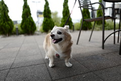 Leica Q (Typ 116) : September 15, 2016 (takuhitofujita) Tags: eyefi eyeficloud flickr 動物 犬 leicaqtyp116