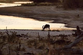 Namibia Dangerous Game Safari - Caprivi Strip 34