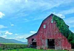 How Now Brown Cow ,   So Hard To Believe It Is  H.F.F.  Again.... (~ Cindy~) Tags: fences countrycattle mountains barn farm tennessee crossville