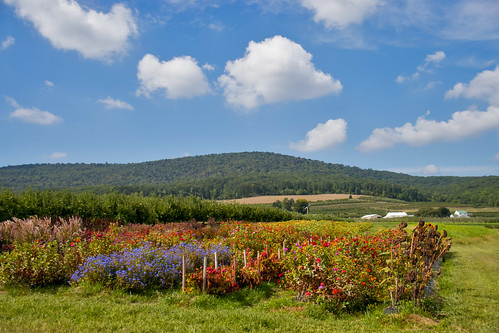 Catoctin Mountain Orchard 15036 N. Franklinville Road, Thurmont (MD) September 2016