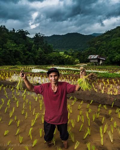 Farmer at work - Chiang Mai  #instagood #bestoftheday #picoftheday #travelgram #natgeo #natgeotravel #natgeoyourshot #globalculture #traveldiaries #bestportraits #top_portraits #instalike #fashion  #instadaily # thailand #farmer #travelphotography #travel