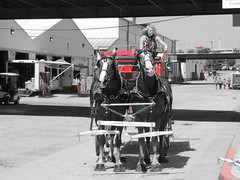 Draft Horse Show (Andrew Penney Photography) Tags: statefairofoklahoma fairday okc 405 horses animals farm farmanimals ffa cowboys cowgirls cowpeople fair kidsday thingsisee thingstodo drafthorsewagon wagon rider