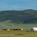 Isso é Mongólia!