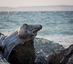 ...and then I came across this fellow - (~ yucatan ~) Tags: wood beach driftwood porttownsend itiswhatitis