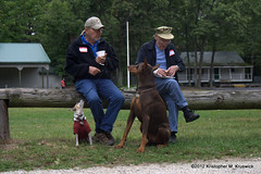 Guess who has food... (kmkruswick) Tags: dru dog doberman dobie 2012 fallpicnic dobermanrescueunlimited