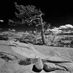 Erratics and a Pine - - - Olmstead Point, Yosemite National Park (ernogy) Tags: california blackandwhite mountains nature pine square landscape outdoors photography nationalpark glacier yosemite granite yosemitenationalpark sierranevada erratics tenaya olmsteadpoint cloulds ernogy