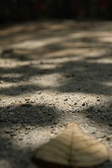 IMG_8355 (LOHalana_SKCD2/012) Tags: light top harsh dapple