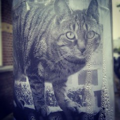 crying (milov) Tags: water cat phonecam paper print poster square tears crying denhaag plastic thehague lostcat lostpet bezuidenhout tweetme fbme htcdesire instagram tumblrme picasame