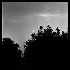 moonrise (b-fd) Tags: blue autumn blackandwhite moon art 6x6 monochrome analog zeiss mediumformat germany blackwhite hannover cm hasselblad mm 500 rodinal hanover 80 planar lightroom 80mm rollfilm lowersaxony efke v700 fujifp100c analogfotografie