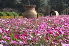 1Day-trip-Jim-Thompson-Farm&Dasada-Gallery_E12663461-016