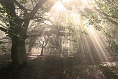Mystical Landscape (dominicmeason) Tags: wood england sun mist fog forest landscape gloucestershire fantasy mystical magical sunbeam cheltenham enchanted middleearth