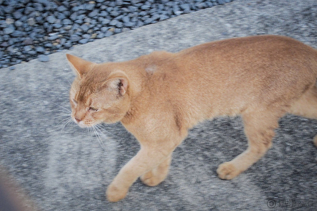 Today's Cat@2012-09-24