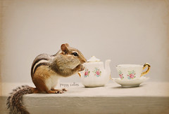Tea Party (Peggy Collins) Tags: tea antique chipmunk teapot chipper teacup teaparty textured chipmunks chinateapot teacupandsaucer chinateacup fancychina citrit peggycollins