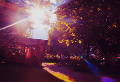 Sunshine (Yoki.~) Tags: park pink blue light sky sun color colour tree nature colors beautiful yellow photography ray colours photograph shining shin purble