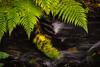 Water and fern (cablefreak) Tags: omd olympus mzuiko 7518 long exposure handheld ibis imagestabilizer telephoto nature fern water motion blur prime lens
