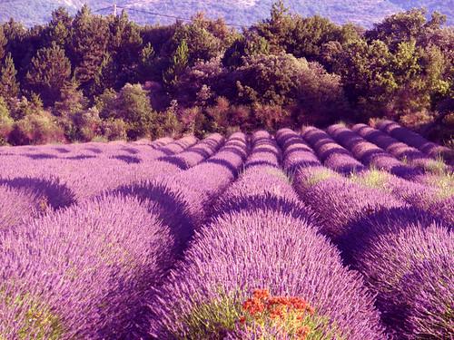 Foto Francia - Provenza, colori, paesaggi e storia
