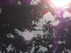 Untitled (40/52) (Abigail-Daisy) Tags: autumn red sun sunlight mist leaves purple dusk gray lavender flare rays hazy