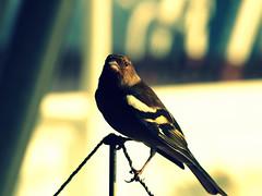 stowaway (Tadgh  Maoildearg) Tags: bridge blur bird ship picasa stowaway