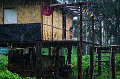 Bathing in rain (SaumalyaGhosh.com) Tags: life travel india green home nature rain stairs bath westbengal