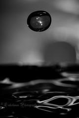 Splash - Mystical Orb (^Lakshman^) Tags: macro art water japan canon eos orb drop droplet splash liquid gifu 2012 lakshman 50d canonef100mmf28macrousm canoneos50d lakshmanphotography