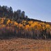 YNP-GTNP-fall-colors24