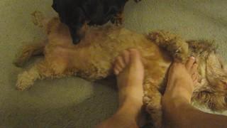 Foot Massage, Sort Of