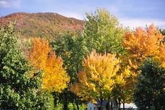Mont-Saint-Hilaire (abdallahh) Tags: canada fall automne qubec mont sainthilaire autumnarbrestreescouleurscolorsgoldyelloworjaunevertgreenbluebleu