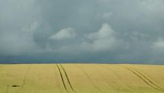 Zwischen den Zielen - Getreide unter schweren Wolken; Thringen (59) (Chironius) Tags: himmel sky ciel cielo hemel  gkyz wolken clouds wolke nube nuvole nuage  thringen deutschland germany allemagne alemania germania    ogie pomie niemcy pomienie commeliniden ssgrasartige poales ssgrser poaceae gras grser herbe gramines grass grasses erba   getreide pooideae