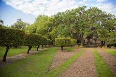 Topiaries at Pinewood Estate