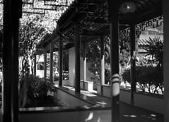 Chinese gardens (Francis Johns) Tags: mamiya6451000s mamiya chinesegardenoffriendship darlingharbour sydney ilford hp5 epsomv550 sekorc80mm