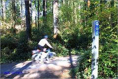Elk/Beaver Lake Loop Trail 9km Marker (Bill 1.6 Million views) Tags: elkbeaver elklake beaverlake capitalregionaldistrict crd crdparks park 10kwalk 10k 9km 10kloop vsrailway vs rails2trails railway railtrail rails trails