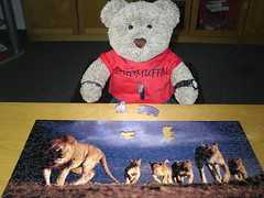 Cor, this one's waaay diffrunt! (pefkosmad) Tags: jigsaw puzzle hobby pastime leisure wooden wentworth whimsy 250pieces woodenpuzzles whimsypieces lions masaimara kenya photo photograph animals wildlife complete lasercut ted tedricstudmuffin teddy bear stuffed soft toy plush fluffy