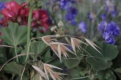 SOMETHING OLD,SOMETHING NEW (botavara_50) Tags: flores viejo nuevo ramillete colores