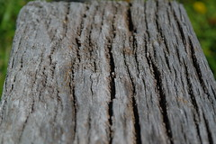 Close-up of bark (Duncan.B) Tags: wwtbarnes wildlife london wood timber weathered samsung samsungnx nx10