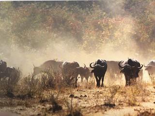 Namibia Hunting Safari - Caprivi Strip 9