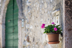 Hanging on the wall (Eklis273) Tags: blume flower door tre wall mauer briefkasten postbox summer sommer outdoor italien italy lagodigarda gardasee lakegarda samyang sonya6000 bardolino