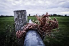 Knot (RigieNL) Tags: hdr gennep netherlands nederland bokeh