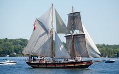 DSC_3425 (mkutz2011) Tags: tallships water waterfront pirates brockville nikon