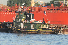 ERIC R THORNTON in New York, USA. August, 2016 (Tom Turner - SeaTeamImages / AirTeamImages) Tags: green thornton ericrthornton tug tugboat vessel tow towing water waterway channel spot spotting tomturner statenisland newyork unitedstates usa nyc bigapple marine maritime pony port harbor harbour transport transportation