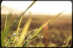 morning dew (asm_naumann) Tags: morningdew dew tau morning earlymorning sunrise countryside rural calm peace quiet nature green grass leaves germany hesse hessen frankenberg